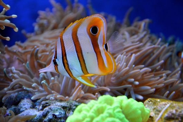 Tips for Keeping Your Pet Fish Happy