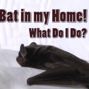 bat inside house