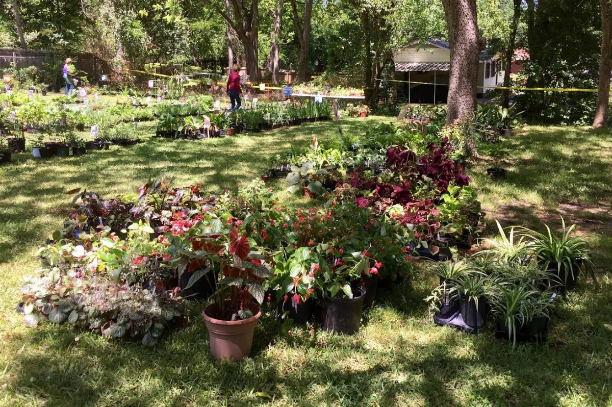 annual plant sale at Mynelle Gardens